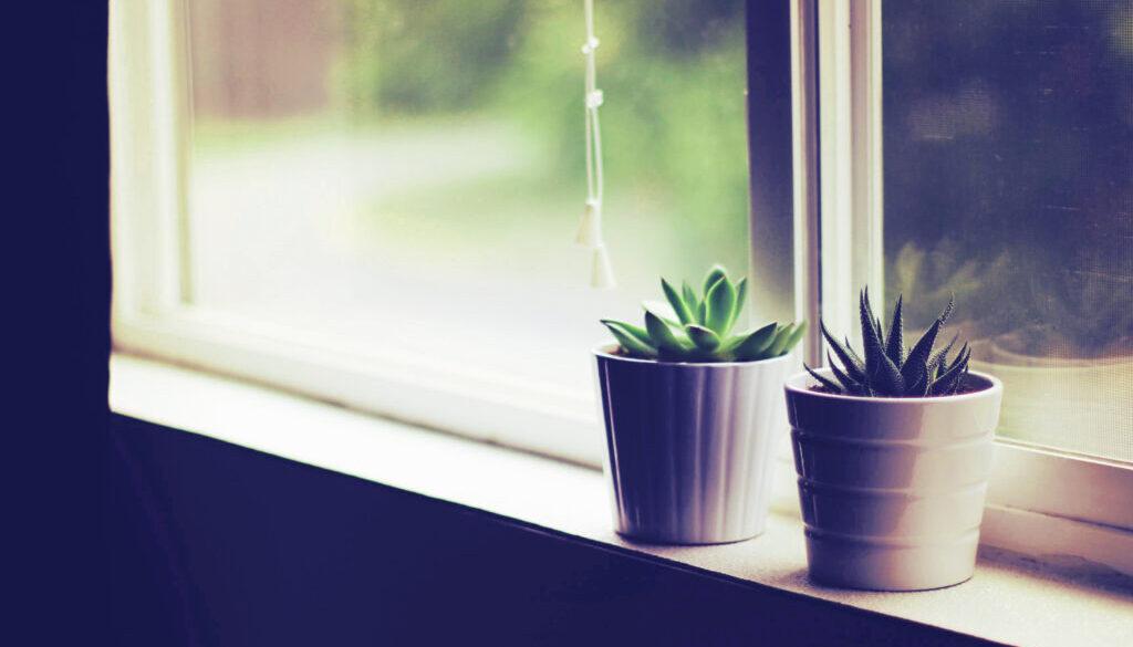 摆放室内盆栽的好处有哪些?