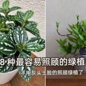 推介新手的绿植种类,让你越种越有信心!